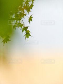紅葉の写真・画像素材[875097]