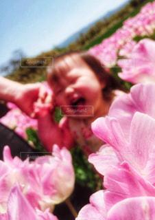 近くの花のアップの写真・画像素材[1158379]
