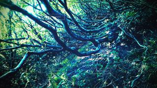 自然の写真・画像素材[1159535]
