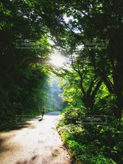 キラキラ森の中の写真・画像素材[1162814]