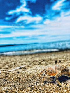 カニ目線の夏の写真・画像素材[1313902]