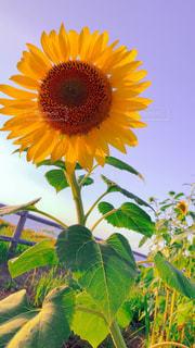 夏の花の写真・画像素材[1378869]