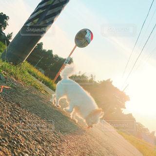 夕暮れのおさんぽの写真・画像素材[2006807]