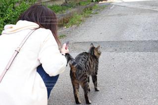 女性,猫,風景,動物,屋外,後ろ姿,人物,背中,人,地面
