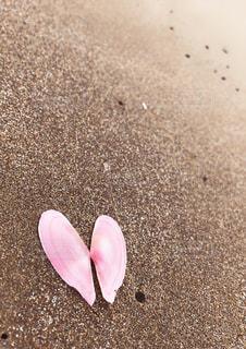 ハート型の貝殻の写真・画像素材[2263315]