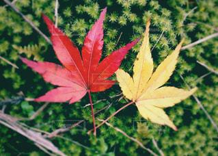 小さな秋の写真・画像素材[2510771]