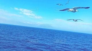 鳥と青空と水平線の写真・画像素材[3545824]