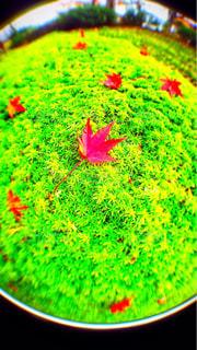近くに緑のフィールドのの写真・画像素材[876301]