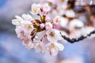 近くの花のアップの写真・画像素材[1138952]