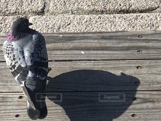 木製のベンチに座っている鳥の写真・画像素材[1138954]