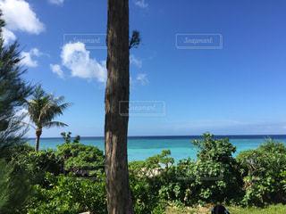 自然,海,空,屋外,樹木