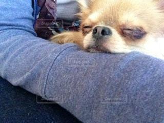 犬を持っている人の写真・画像素材[1223538]