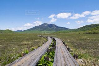 山に続く木道の写真・画像素材[800629]