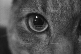 近くにカメラを見て黄色の目を持つ猫のアップの写真・画像素材[815662]