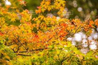 近くの木のアップの写真・画像素材[800016]