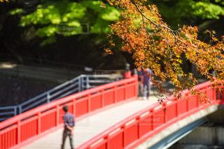 赤と白のフェンスを通過列車します。の写真・画像素材[800021]