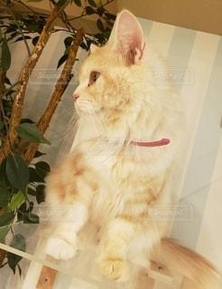 猫カフェ🐈の写真・画像素材[2294500]