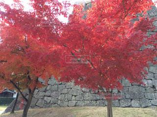 レンガの壁の前に木の写真・画像素材[845633]