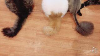 3匹の猫の写真・画像素材[815360]