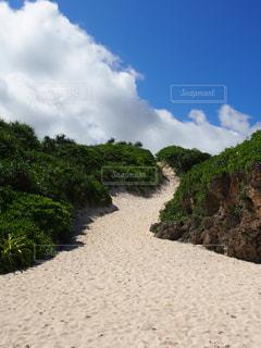 沖縄の写真・画像素材[802235]