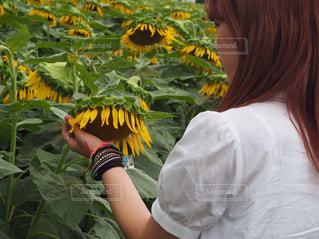 黄色のシャツの女性の写真・画像素材[896963]
