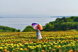 花畑と私の写真・画像素材[799839]