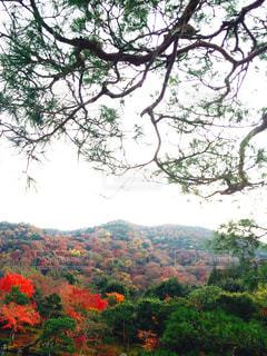 背景の山と木の写真・画像素材[1632425]