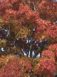 雨の写真・画像素材[832369]