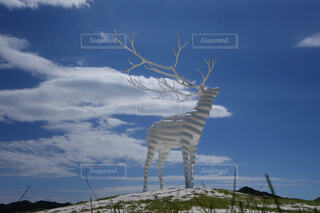 white deerの写真・画像素材[4468407]