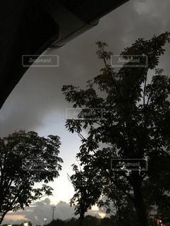 近くの木のアップの写真・画像素材[812482]