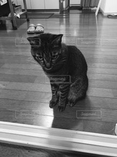 窓の前に座っている猫の写真・画像素材[826051]