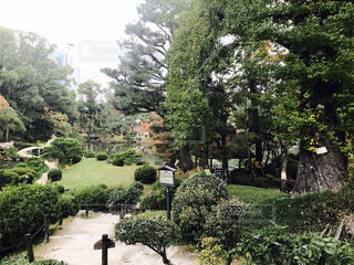 庭の茂みのグループの写真・画像素材[851733]
