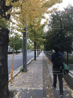 ツリー横の通りを歩く人々 のグループの写真・画像素材[851749]
