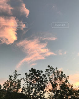 空の木 - No.804967