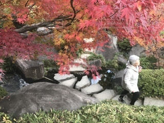 おばあちゃんとお散歩の写真・画像素材[888953]