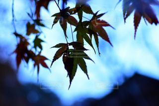 近くの木のアップの写真・画像素材[845540]