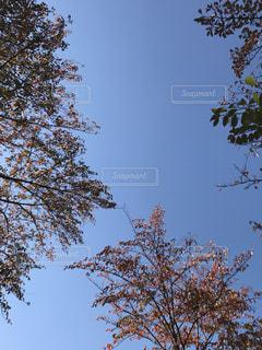 秋の空と紅葉の写真・画像素材[843619]
