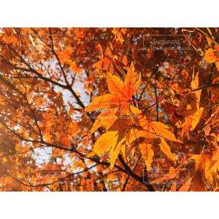 近くの木のアップの写真・画像素材[851681]