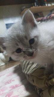 猫の写真・画像素材[24660]