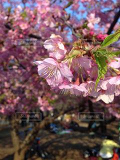 近くの花のアップ - No.804426