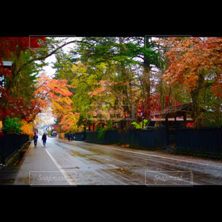 角館武家屋敷通りの写真・画像素材[851665]