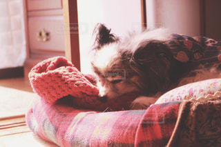 犬の写真・画像素材[504173]
