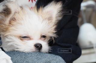 犬の写真・画像素材[504174]