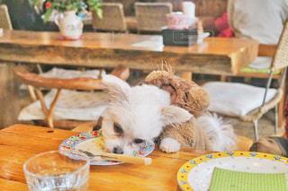 テーブルの上に座っている犬の写真・画像素材[973659]