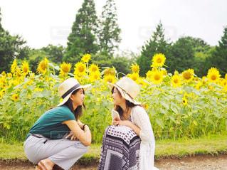 ひわまり畑との写真・画像素材[1354361]