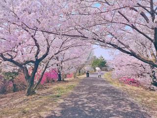 春,桜,ピンク