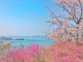 春,桜,ピンク,瀬戸内海,ピンク色,pink,伯方島