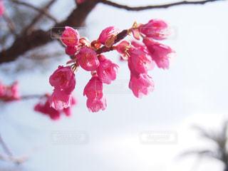 春,ピンク,桃,ピンク色,pink