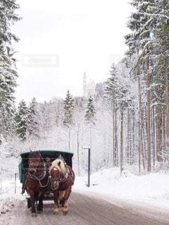 雪の中で馬に乗る人の写真・画像素材[1758749]