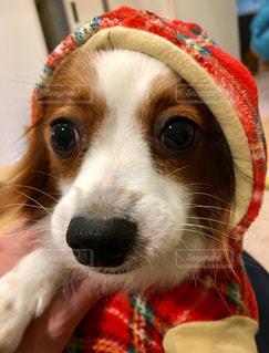 冬,マフラー,帽子